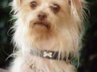 Westley is an 8 lb., 3 year old sweet boy. He came from