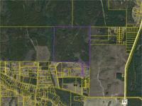 165 Acres in Gulf County Florida. Exceptional lumber