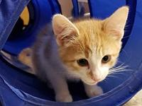 Wheat's story Fun, playful kittens ready for forever