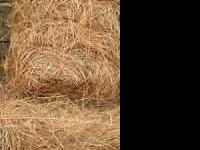 We have clean, longleaf pine straw bales & wheat straw