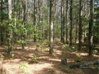 45 acres, more or less, (subject to survey) of forest