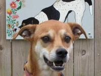 Whippet - Mindy - Medium - Adult - Female - Dog Hi