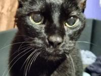 SWEET DECLAWED SENIOR CAT WANTS TO SHARE YOUR LIFE!