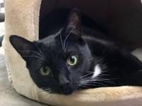 Whiskey is a handsome 3 yr old, neutered male. He is a