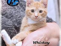 Whiskey's story Make sure you let us know you saw