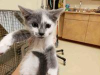 WHISP's story My name is Whisp! I am a very cute and a