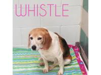 Whistle is a cutie pie! She loves people so much she