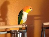 This is Jill, a White Bellied Caique. Jill is a real