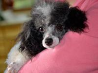 Georgiana is a very sweet girl, she weighs around 5-6