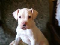 I have one female and one male white boxer young puppy