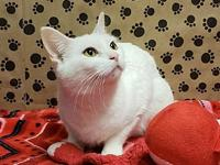 WHITE, Catalina (Momma)'s story Female 1.5yr talkative