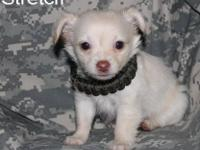 Name: Stretch DOB: 09-26-12 Sex: Male Color: White