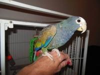 I have a 5 year old white-crowned pionus.I was told