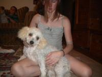 ckc white female mini poodle her name is fifi she is 3