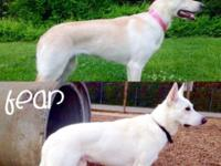 Phenomenal WGSD pups are due the first week of October,
