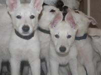 New photos added Sept. 29th. These pups just turned 2