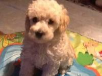 JJ is a busy boy! You will love this little man. He is