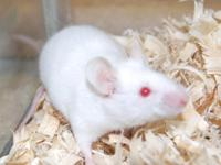 Sean Casey Animal Rescue currently has afemale white