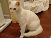 Animal Type: Cats Breed: Siamese Snowy is a truly