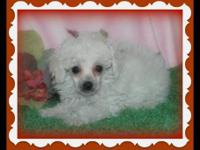 "Ice White little ""Princess"" is available, born in a"