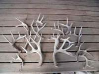 I have for sale 15 shed deer antlers asking $150 for
