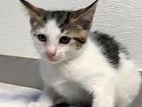 Wicket (Kitten)'s story Hi! I'm Wicket. I am one of the