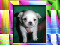 have 3 male puppies left out of a litter for adoption.