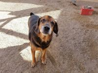 Wilbur is a Beagle mix who found himself at the county