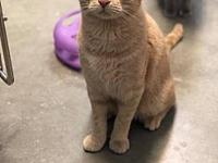 Wilbur's story Would you like a sweet cat that will be