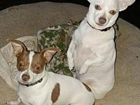 Wilbur & Spot's story You can fill out an adoption