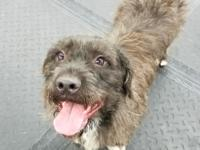 Meet Wlibur A fun loving 2 yr old Terrier mix ready to