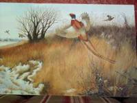 Pheasant oil painting on stretched canvass. This