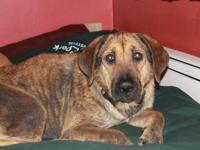 Wilhemina is a sweet lab mix who doesn't know what love