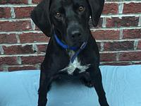 Will's story Will is a male lab/hound mix and is