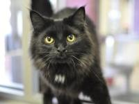 Willard's story I am a very affectionate and handsome
