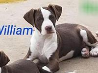 William's story Rebel Rescue dogs must have supervised