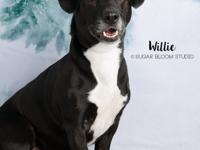 Willie is a really sweet and personable dog, and he