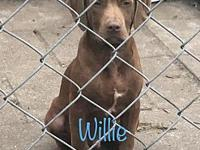 Willie's story These sweet pups were found wandering