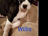 Willis's story Rebel Rescue dogs must have supervised
