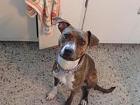 Willow's story If you are interested in adopting an