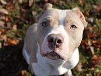 Willow's story Meet Willow! Willow came to us from a