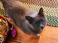 Willow is a very pretty girl with soft smokey grey fur