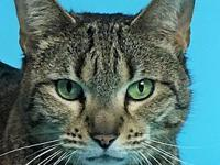 Willow's story Willow is a Domestic Short Hair (DSH),