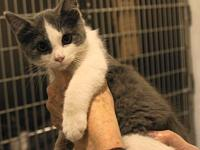 Willow's story Willow is one of 5 kittens born to a