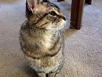 My story She's a pretty little tabby about a 1-2 years