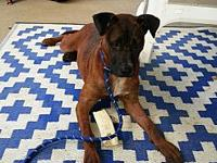 Willow's story Willow is still a puppy, approx. 6 mos.