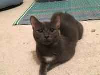 My name is Willow! Im super sweet, but s little shy at