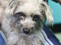 Willow's story Adoption fee is $150, this dog is