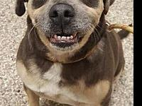 Willy's story Come and meet your new best friend today!