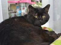 Willy *Special Adoption Fee's story I am 3 years old! I